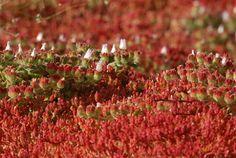 Plantas angiospermas ejemplos yahoo dating