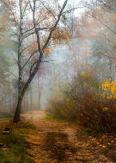 Misty autumn forest path 1 (Ukraine) by Oksana Galanzovskaya // Тум Bilder Landscape Plans, Landscape Photos, Landscape Art, Landscape Paintings, Landscape Design, Landscape Photography, Nature Photography, Misty Forest, Forest Path