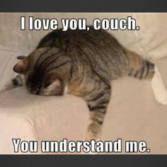 LOLcats is the best place to find and submit funny cat memes and other silly cat materials to share with the world. We find the funny cats that make you LOL so that you don't have to. Humor Animal, Funny Animal Memes, Cute Funny Animals, Funny Cute, The Funny, Super Funny, Funniest Animals, Crazy Funny, That's Hilarious