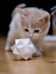 studying geometry お初にお目にかかります