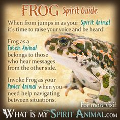 The most in-depth Frog Symbolism & Frog Meanings! Frog as a Spirit, Totem, & Power Animal. Plus, Frog in Celtic & Native American Symbols and Frog Dreams! Spirit Animal Totem, Animal Spirit Guides, Your Spirit Animal, Native American Zodiac, Native American Symbols, Native American Quotes, American Indians, American Spirit, Animal Meanings