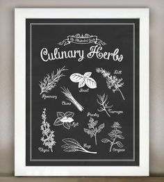 Culinary Herbs: An Illustrated Guide | Art Prints | Lettered & Lined | Scoutmob Shoppe | Product Detail