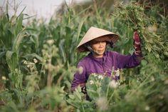 a farmer www.worldwidewax.ch #Vietnam #Travel #Wanderlust #Nature #Landscape #people #portrait #photoftheday Hoi An, Photo Series, Vietnam Travel, Hanoi, Farmer, Hue, My Photos, Wanderlust, Sunset
