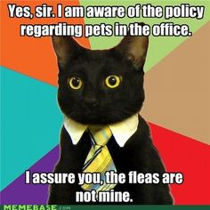 The 10 Best Business Cat Memes - Cats vs Cancer Memes Humor, New Memes, Funny Cat Memes, Funny Cats, Funny Animals, Funny Humor, Funniest Animals, Funny Captions, Animals Dog