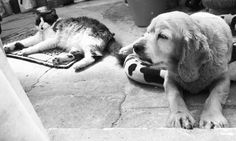Friends #cat & #cat #coker #pets