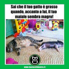 La prova definitiva! #bastardidentro #gatto #maiale www.bastardidentro.it