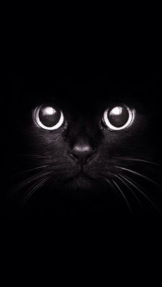 Black Cat - Irresistable cuteness #cats #animal iPhone wallpaper | mobile9.com: