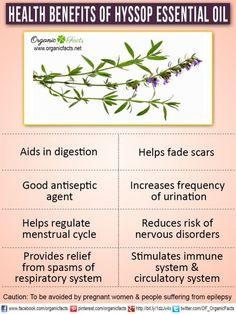 Health Benefits of Hyssop Essential Oil