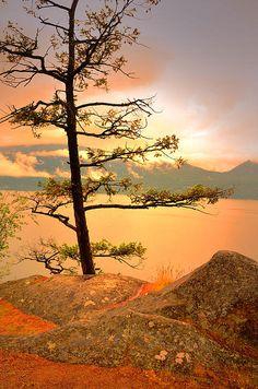 lone tree....Ellison Provincial Park- Vernon BC Canada