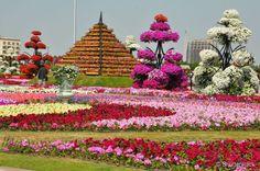 Conheça o Dubai Miracle Garden, um jardim no meio do deserto
