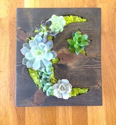 Friday Find :: Adorable Vertical Succulent Gardens