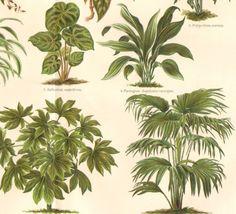 lady palm tree - Google Search