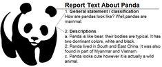 contoh report text tentang hewan panda