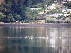 Mirrored reflections, Otago Peninsula, New Zealand. New Zealand, Mirrors, Photographs, River, Early Morning, Outdoor, Image, Outdoors, Mirror