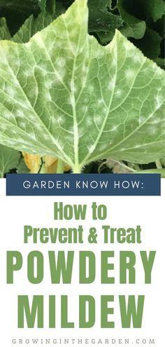 Organic Gardening, Gardening Tips, Arizona Gardening, Squash Varieties, Container Gardening, Succulent Containers, Container Flowers, Container Plants, Plant Diseases