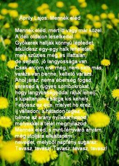 Poems, Herbs, Hungary, Google, Travel, Viajes, Poetry, Verses, Herb