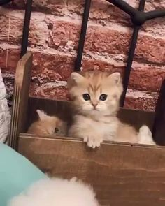 Your source of cute baby animals. Cute Cats And Kittens, Baby Cats, Kittens Cutest, I Love Cats, Pretty Cats, Beautiful Cats, Animals Beautiful, Cute Funny Animals, Cute Baby Animals