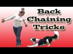 Backchaining in Dog Training | hubpages