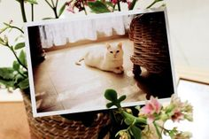 Sweet Sunday - I Want to Have a Cat Polaroid Picture Postcard set, $15.99 (http://www.sweetsundayshop.com/i-want-to-have-a-cat-polaroid-picture-postcard-set/), Korean Stationery / Cute Stationery