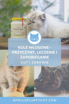 Dowiedz się, skąd biorą się kule włosowe w brzuszku Twojego kota, jak je leczyć i jak im zapobiegać. Apollo, Facial Tissue, Personal Care, Self Care, Personal Hygiene, Apollo Program
