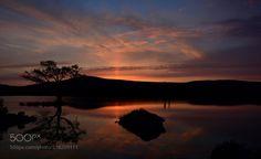 sunset-Tree by Sultann via http://ift.tt/2syTp1V
