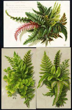 3 Victorian Cards Ferns Foliage 1880's Floral Greeting Friendship | eBay