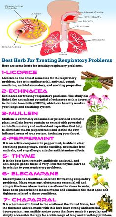 Care is one of the most important things to consider when studying the use of natural herbs and man-made drugs. Prescribed drugs kill approximately 1 million Americans every year. Herbs are a useful alternative to battling the antibiotic-resistant superbugs. Herbs are best for treating the respiratory problem and repair lung health.