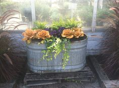 container gardening, fall decorating, ornamental kale and ornamental cabbage