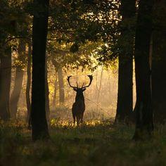 Hunting season.