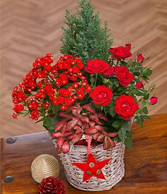 Winter Flower Basket - A festive wicker basket with red Rose plant, Fittonia and Kalanchoe framed by a lovely Conifer plant.