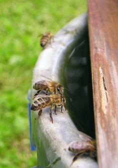 How To Attract Honey Bees To Your Organic Garden - Homestead Backyard Permaculture, Raising Bees, Bee Friendly, Organic Gardening Tips, Vegetable Gardening, Greenhouse Gardening, Flower Gardening, Organic Farming, Aquaponics System