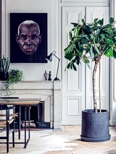 How to choose the perfect plant for your home interior - Vogue...