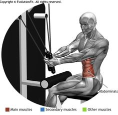 ABDOMINALS -  TORSION SEATED CABLE MACHINE