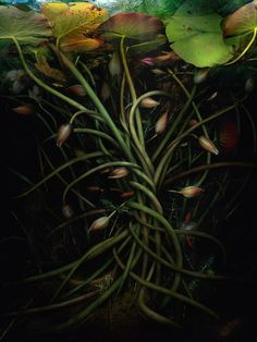 catherine nelson's labyrinth landscapes submerge viewers in a fictional flood of flora Underwater Photography, Nature Photography, Photo Illustration, Botanical Illustration, Hello Photo, Underwater Plants, Adventure Aesthetic, Plant Painting, Lotus Painting
