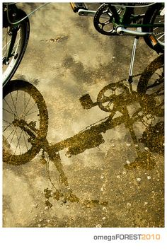 Dahon Speed D7 by omegaforest, via Flickr Bicycle, Joy, Painting, Bike, Bicycle Kick, Glee, Painting Art, Bicycles, Paintings