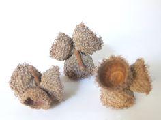 8 Sets of Triples - Unfinished Small Fringed Bur Oak Acorn Caps