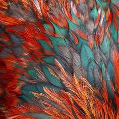 Ook in de natuur is de combinatie van de kleur van 2014 (TEAL) en de kleur van 2015 (KOPER ORANJE) ontzettend mooi
