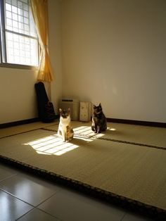 Calico's and their sun spot-