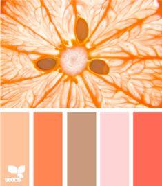 design seeds hues tones shades  color palette, color inspiration cards #hues #tones #shades #colorpalette #colorinspiration #designseeds