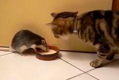 ¿Lo creías posible? #Gatos