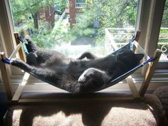 July 22 is known as Hammock Day all around the world. It's a hashtag holiday usually celebrated by humans, but what's to stop you letting your cat in on the hammock action? Here's a round-up of DIY cat hammock tutorial videos. I Love Cats, Crazy Cats, Cute Cats, Kitty Play, Diy Cat Hammock, Cat Toilet Training, Animal Gato, Sheila E, Pet Beds