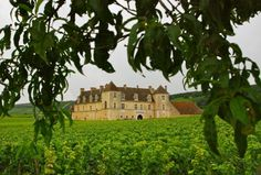 Vineyards of Chateau Veugeot in the Cote d'Or region of Southern Burgundy, France
