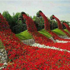 Miracle Garden,Dubai