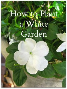 "How to plant a ""white garden' like the one at Sissinghurst Castle.  Come by to learn & see the original. http://mysoulfulhome.com/garden-plan-sissinghurst-mind/"