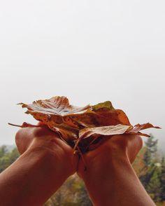 [colors] - L'autunno è la massima espressione artistica di madre natura non trovate? - - - - { #autumn } - - - -