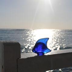 The LALIQUE FISH. Beach