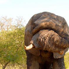 Unglaublich Safari, Elephant, Animals, Tour Operator, Cape Town, Nature Reserve, Wilderness, Art Gallery, Elephants