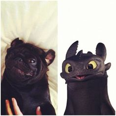 Pug vs Dragon - SO TRUE! I have a black pug and that's the first thing I thought of when I saw this movie.