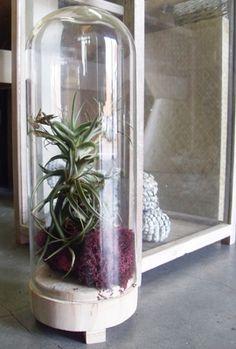 moss | reindeer moss | claudania stellaris | green walls | indoor-garden | luxurious design | acoustic dampening | sound absorption | vertical garden