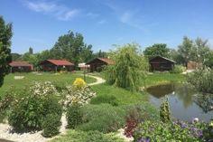 Tündér farm zirc Golf Courses, Plants, Plant, Planets